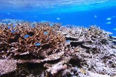 八重干瀬サンゴ礁群02