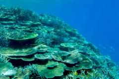 宮古島八重干瀬サンゴ礁群02