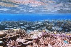 八重干瀬サンゴ礁群01