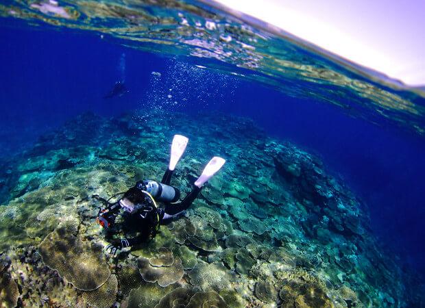 八重干瀬体験ダイビング+シュノーケルトリップ3h