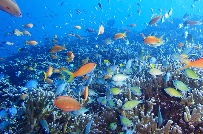 宮古島 八重干瀬 サンゴ礁