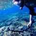 今日の宮古島の天気&八重干瀬の海況とツアー開催状況 2019年11月4日(月)