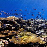 Point.03海のお花畑、八重干瀬のサンゴを見に行こう!